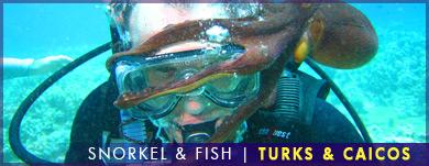 Snorkel and Fish, Turks & Caicos
