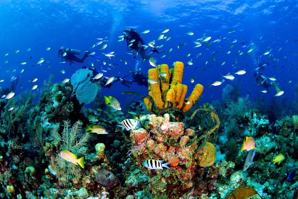 Scuba Diving, Grand Cayman