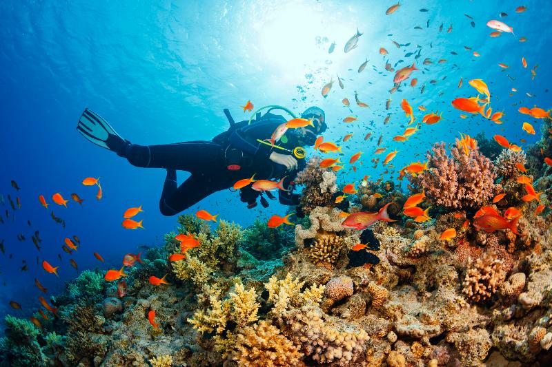 Turks & Caicos Scuba Diving