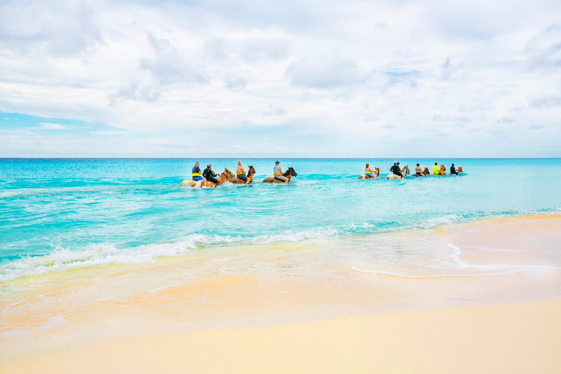 Turks & Caicos Provo Ponies